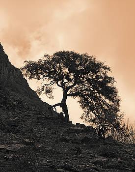 Walking Tree by Ron Dubin