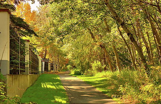 Walking Under Poplars by Jim Sauchyn