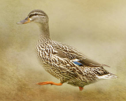 Walks Like A Duck by TnBackroadsPhotos
