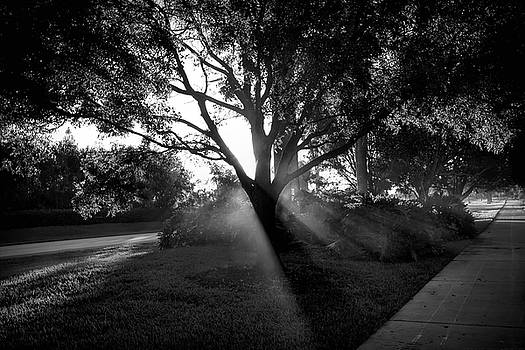Walks of Light by Chrystyne Novack