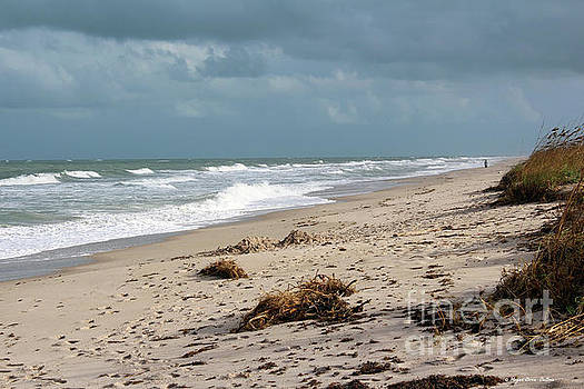 Walks on the Beach by Megan Dirsa-DuBois