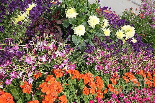 Chuck Kuhn - Walkway 2 Flowers