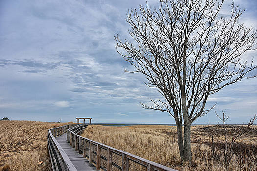 Walkway at Plum Island by Tricia Marchlik