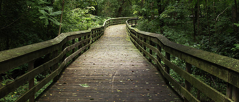 Walkway in Green by Kelly Lucero