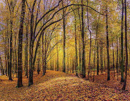Walkway in the autumn woods by Dmytro Korol