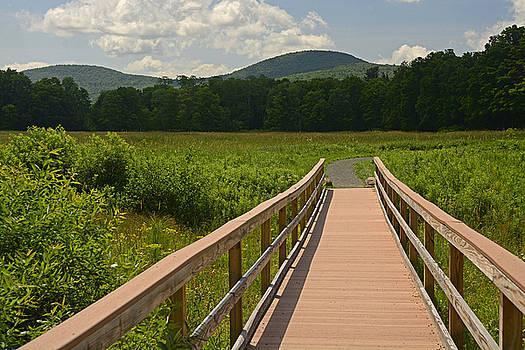 Walkway to a Mountain color by Nancy De Flon
