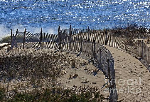 Walkway to the Beach by Robert Pilkington