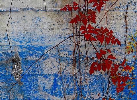 Wall #0449 by Jeffrey Morrison