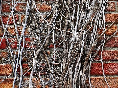 Wall # 2394 by Jeffrey Morrison