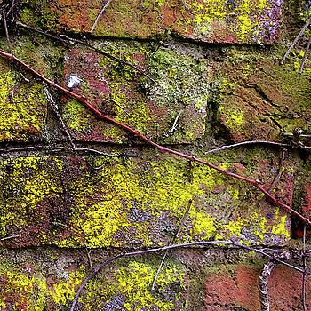 Wall by Anne Kotan