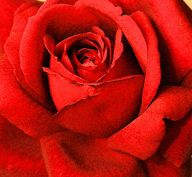 Wall Art Rose Red by Marna Edwards Flavell