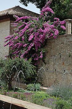 Wall of Flowers by Al Junco