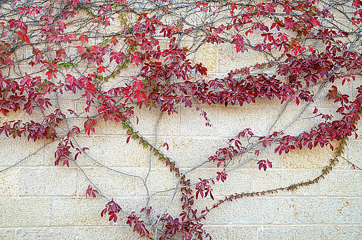 Wall of Leaves 2 by Dubi Roman