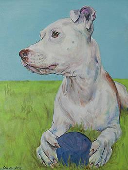 Wallace, Pittie Bull by Clara Yori