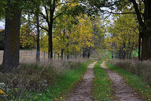 Walnut Lane by Melissa Lane