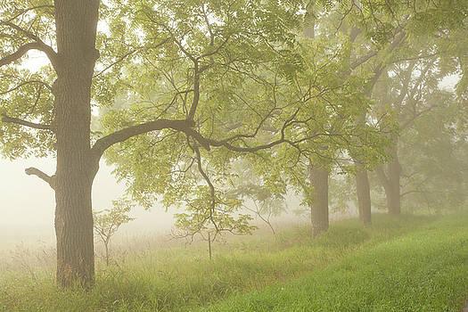 Walnut Trees in the Fog by Kevin Kludy
