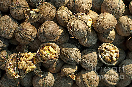 Walnuts in shell by Deyan Georgiev