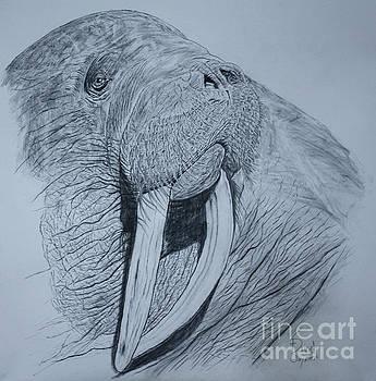 Walrus by David Joyner