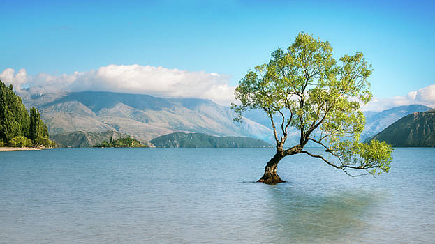 Wanaka Tree on a Serene Morning by Daniela Constantinescu