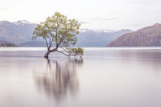 Wanaka Tree by Racheal Christian