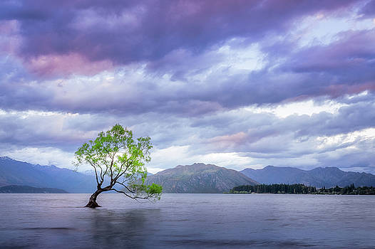 Wanaka Tree Sunset by Daniela Constantinescu