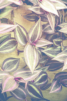 Wandering Jew by Olivia StClaire