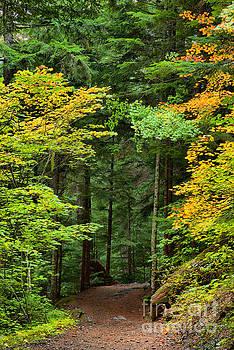 Adam Jewell - Wandering Through The Trees