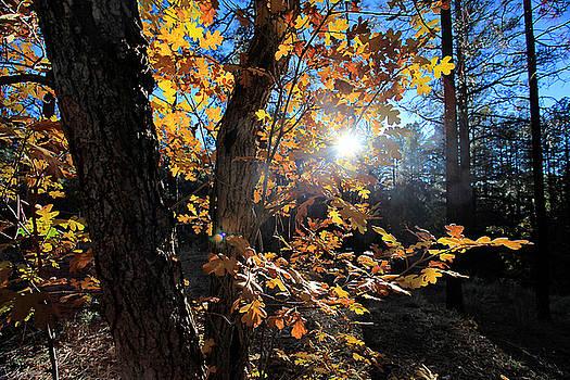 Waning Autumn by Gary Kaylor