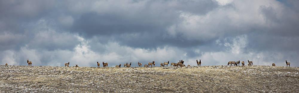 Wapiti Ridge by Sean Allen