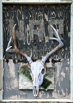 War Skull by Lynn Hansen
