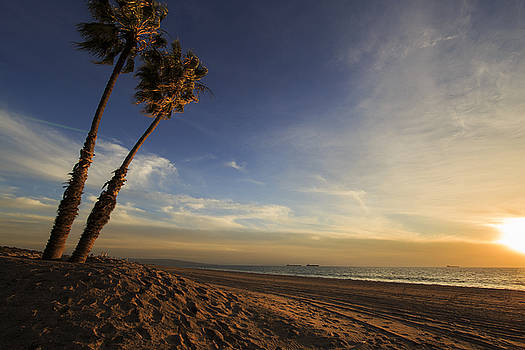 Warm and Windy Palms by ChrisAntoniniPhotography