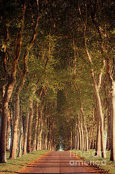 Warm French Tree Lined Country Lane by Paul Warburton