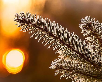 Chris Bordeleau - Warm Frost on Pine Needles