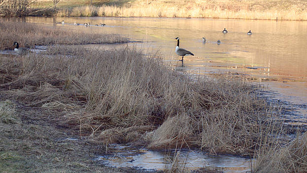 Warm Ice Morning by Linda Clearwater