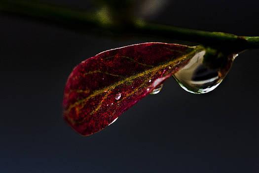 Warm Rain by Leo Bello