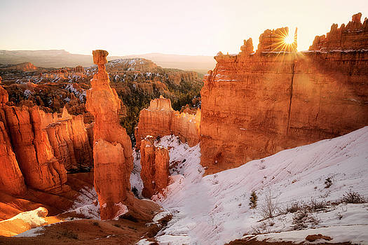 Warm Winter Light  by Nicki Frates