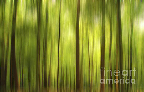 Warmth of the Forests Colors by Melissa Fague