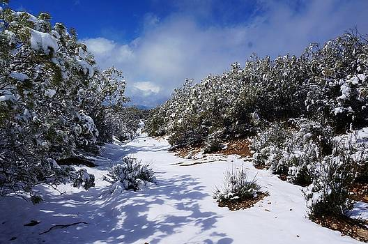 Warner Springs Snow by Julia Ivanovna Willhite