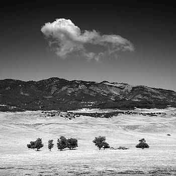 Warner Springs Trees and Cloud by William Dunigan