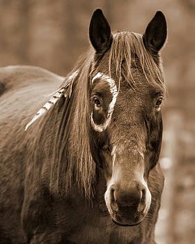 Warrior Horse by Heather Swan