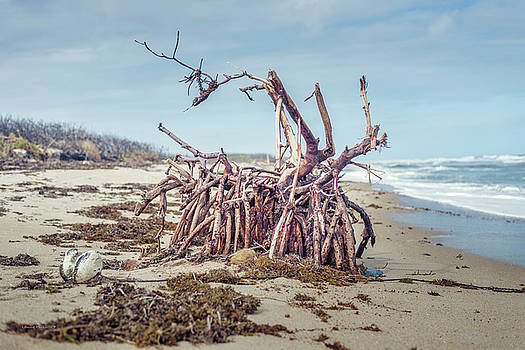 Washed Ashore by Louise Hill