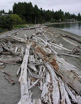 Washed UP by Diane Greco-Lesser
