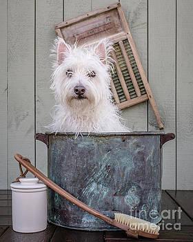 Edward Fielding - Washing the Dog