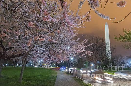 Rima Biswas - Washington Monument and cherry blossom