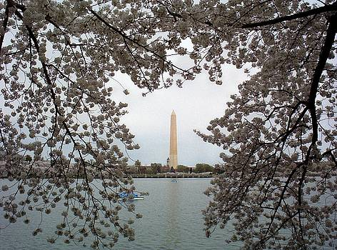 Washington Monument by Joyce Kimble Smith