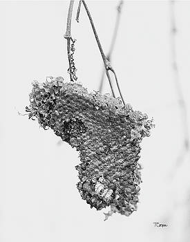 Wasp Nest Heart by Tonya Cooper