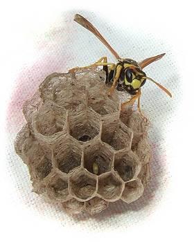 Bill Kellett - Wasp Number Two