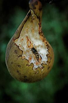 Wasp On Pear by Gavin Bates