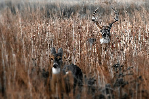 Watcher by Garett Gabriel