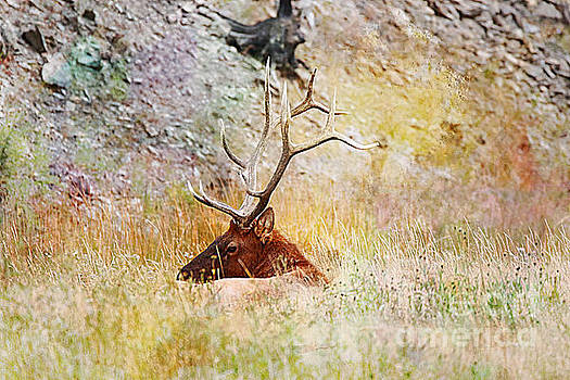 Watchful eye by Robert Pearson